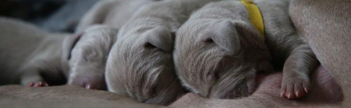 puppies hondjes